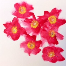 Mandorlo in fiore - Agrigento